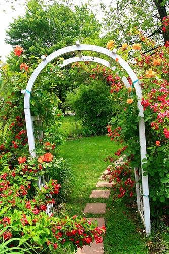 backyard trellis with roses